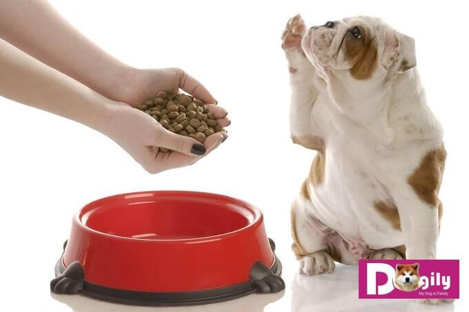 Chó bỏ ăn do được chủ quá nuông chiều trong ăn uống