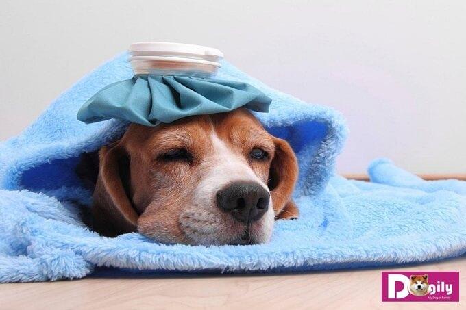 Chó bỏ ăn do bị bệnh