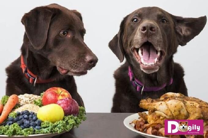 Cần quan tâm nhiều hơn đến khẩu phần ăn của chó