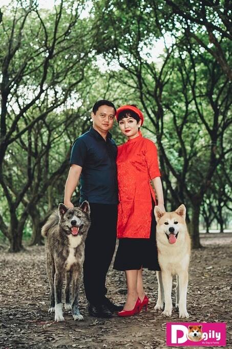 Những chú chó Akita tiêu biểu của nhà Dogily. Hình trên bên trái: Izumi Gai Kaito - Việt Nam Junior Champion 2017. Con trai của Yashiomaru Go Akita Suzuki - Vô địch châu Âu và Liên Bang Nga. Bên phải: Simba-thế hệ Akita Inu thứ hai nhà Dogily