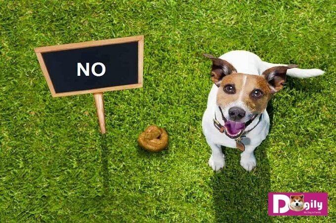 Chó ăn phân có phải là bệnh?