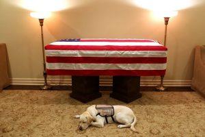 Chú chó Labrador tên Sully luôn túc trực bên thi hài cố Tổng thống Bush.