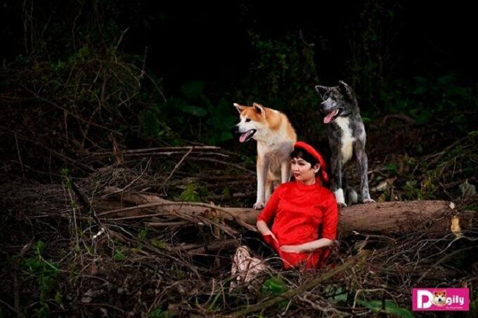Hình ảnh hai chú chó Akita Inu của Dogily Petshop chụp ảnh cùng chị Vương Trang tại vườn nhãn Long Biên trong một chiều cuối thu năm 2018