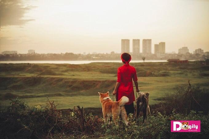 Mẹ Vương Trang: Mình băng qua đồng cỏ, bơi qua sông Hồng rồi về nha Kaito, Simba... ???