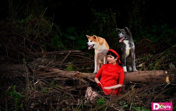 Bộ ảnh được thực hiện trong một buổi chiều hoàng hôn. Với ba nhân vật chính là hai chú chó Akita Inu tên Kaito và Simba cùng Chị Vương Trang - Phụ trách truyền thông của Dogily.vn