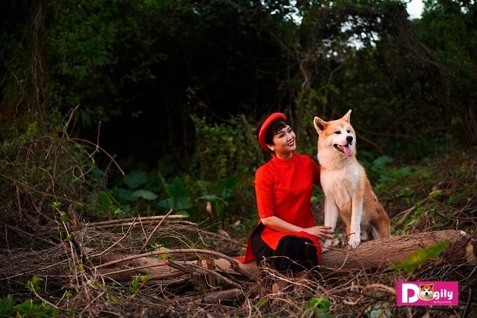 Chú chó Akita Inu đầu tiên ra khỏi biên giới Nhật Bản vào năm 1939. Gần 80 năm sau, những chú chó Akita Inu đầu tiên mới được nhập vào Việt Nam. Trong hình chị Vương Trang đang âu yếm chú chó Akita Simba của gia đình Dogily