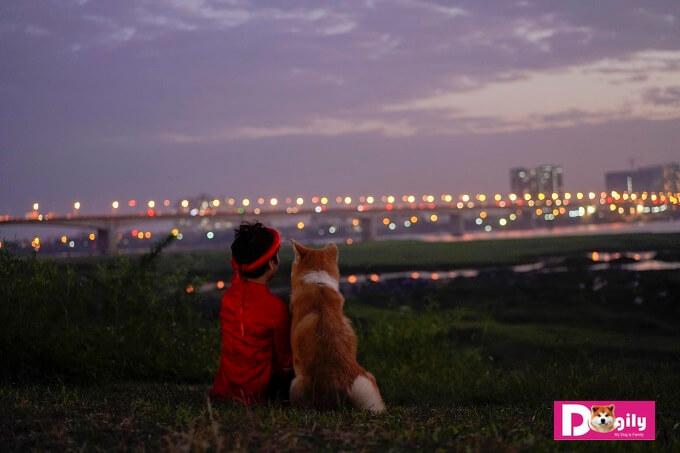 Vườn nhãn Long Biên là một địa điểm chụp ảnh tuyệt vời. Trong hình chú chó Akita Inu Simba đang nhìn về phía những ánh đèn lấp lánh trên cầu Vĩnh Tuy (Hà Nội) khi màn đêm dần buông xuống.