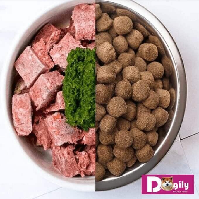 Thức ăn hạt khô cho chó hoàn toàn có thể thay thế cho thức ăn tươi cho chó