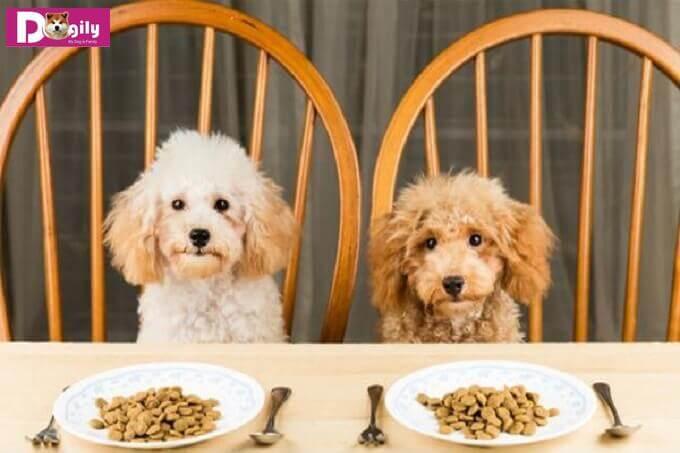 Thức ăn khô cho chó có những ưu điểm vượt bậc gì so với loại thức ăn tươi