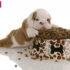 Tư vấn cách sử dụng thức ăn hạt khô cho chó.