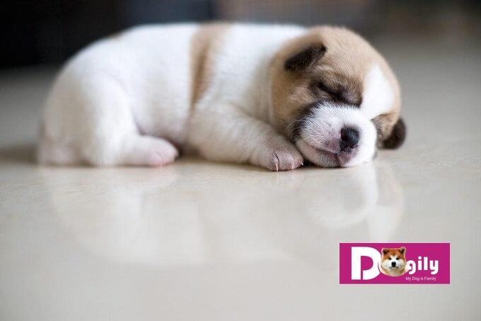 Hướng dẫn nuôi chó con mới đẻ - xây dựng môi trường sống thân thiện