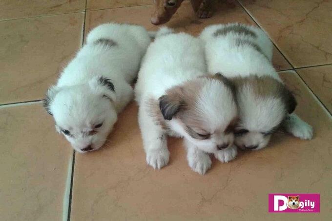 Hướng dẫn nuôi chó con mới đẻ khoa học, hợp lý, tiết kiệm