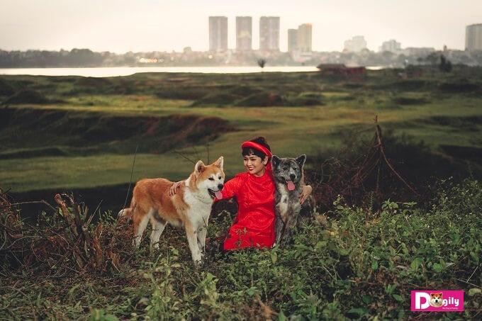 Chó Akita Inu được rất nhiều người nổi tiếng chọn làm cún cưng như Tổng thống Nga Putin, tài tử điện ảnh huyền thoại Alain Delon (Pháp). Trong ảnh: Hai chú chó Akita Inu nhà Dogily trong một khuôn hình tuyệt đẹp
