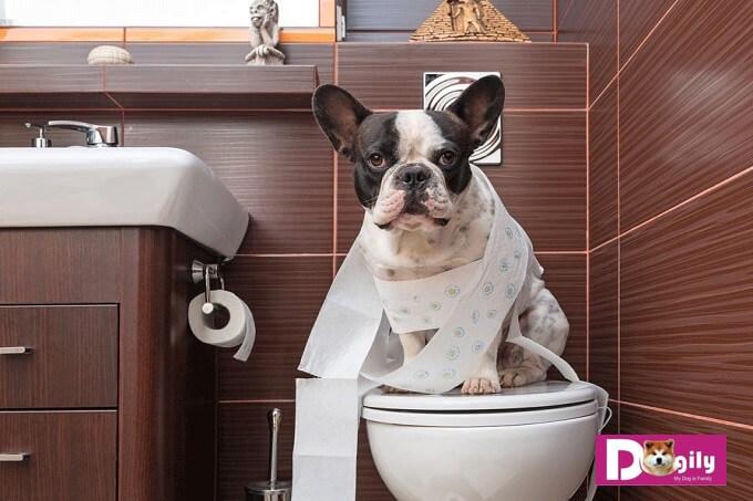 Chó ăn phân bắt nguồn từ bản năng