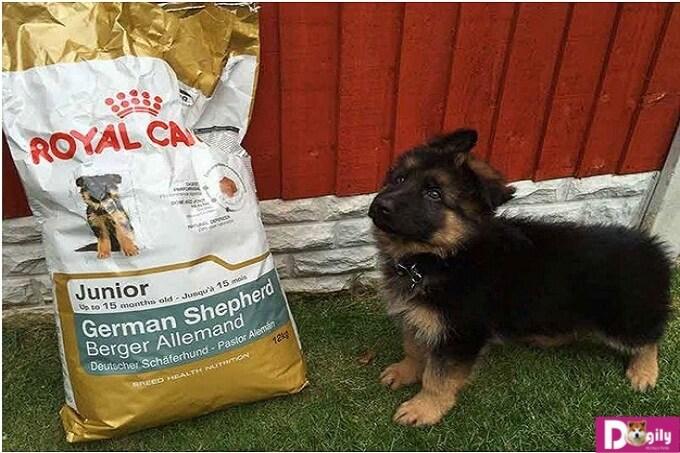 Giới thiệu hạt Royal Canin cho chó. Địa chỉ bán hạt Royal canin tại các cửa hàng của Dogily Petshop Tphcm, hà nội.