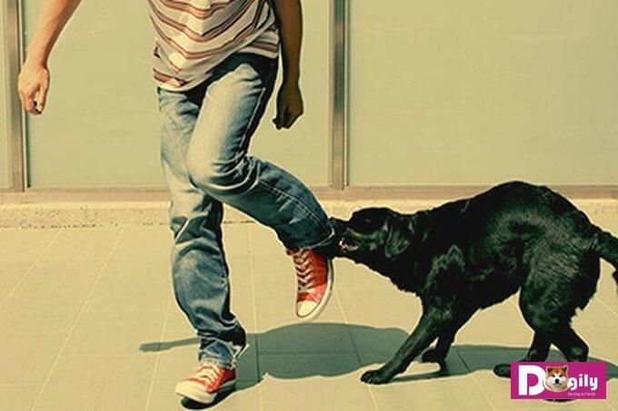 Khi bị chó cắn hãy lập tức sơ cứu vết thương