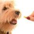 Giun sán ở chó: Nguyên nhân và cách phòng tránh, điều trị hiệu quả.