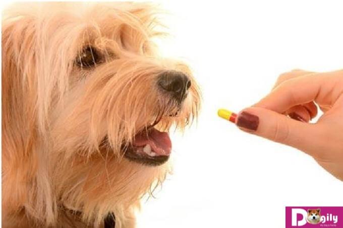 Các loại giun sán ở chó thường gặp