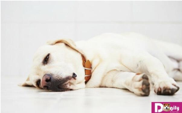 Thực hiện tẩy giun sán ở chó để phòng và điều trị nhằm đem lại sức khỏe tốt nhất cho chó cưng nhà bạn