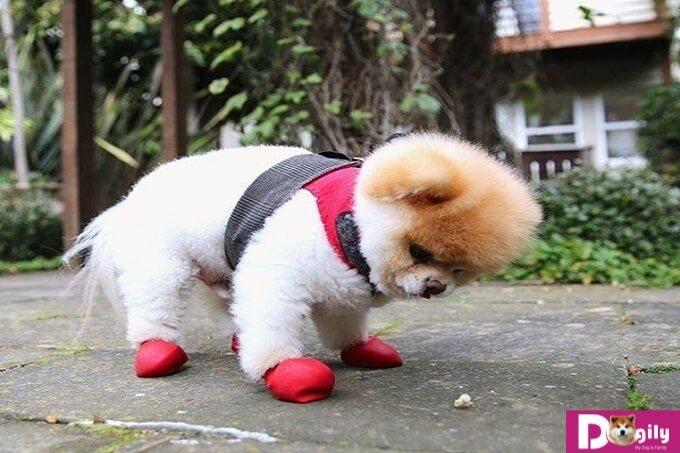 Những lưu ý cần quan tâm để phòng tránh tình trạng nhiễm giun sán ở chó