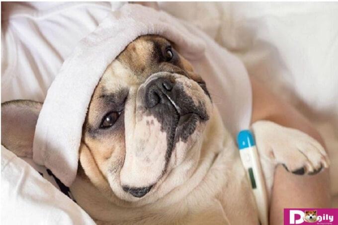Các dấu hiệu cho thấy vật nuôi bị nhiễm nội ký sinh giun đũa chó và sán chó