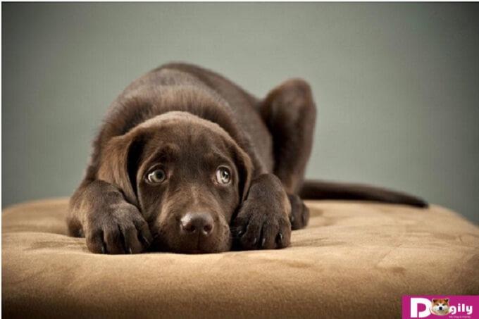 Tìm hiểu về giun đũa chó và sán chó