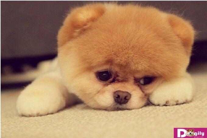 Các biện pháp giúp phòng tránh tình trạng giun đũa chó và sán chó