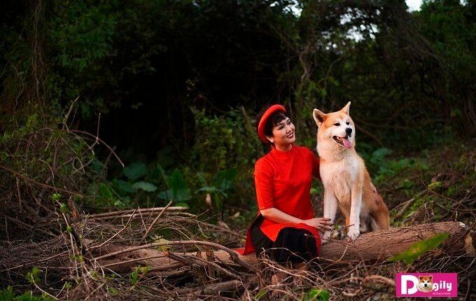 Dogily Kennel hiện là trang trại nuôi chó Akita lớn nhất tại Việt Nam. Chúng tôi xin chia sẻ kinh nghiệm nuôi và chăm sóc chó Akita Inu hiệu quả nhất