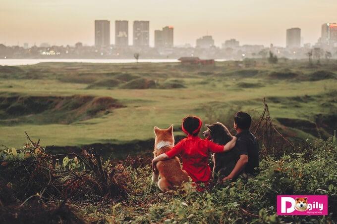 Ngoài việc nhân giống trực tiếp tại Trang trại Dogily Kennels. Dogily còn chuyển giao con giống cho một số trại chó uy tín để phát triển giống chó Akita Inu tại Hà Nội