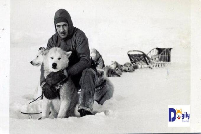 Hình ảnh những chú chó kéo xe Chinook trong đoàn thám hiểm của đô đốc Byrd