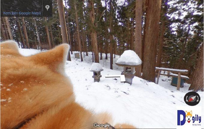 Khung cảnh vùng Odate (quê hương của chó Akita) mùa đông thật thanh bình và khoáng đạt. Với tuyết trắng phủ khắp nơi. Nổi bật trên đó là những cánh rừng xanh ngát huyền ảo như cổ tích