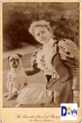 Nguyên nhân chó pug bị biến dang do nhân giống là do sở thích của con người. Hình ảnh chó Pug chụp vào cuối thế kỷ 19 với ngoại hình khác hoàn toàn ngày nay.