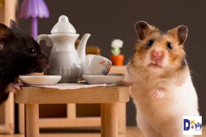 Bạn không nên cho chuột hamster ăn các thực phẩm chua, cay, đắng như cam, chanh, ớt, hành ngò gia vị, hay sô cô la, cà phê, cacao. Sẽ làm phá hủy hệ tiêu hóa của chúng