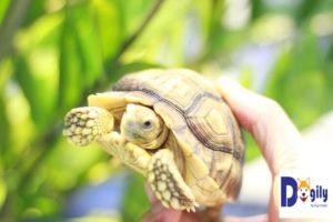 Rùa theo phong thủy thuộc hành hỏa