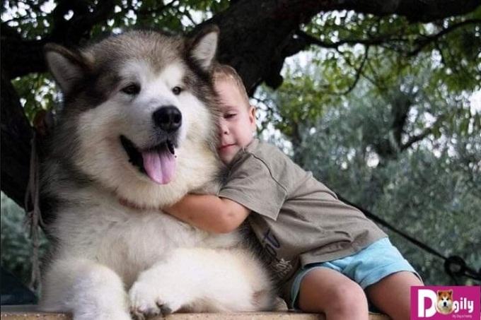 Cũng như con người, việc khen thưởng và kỉ luật đối với chó Alaska cũng rất quan trọng