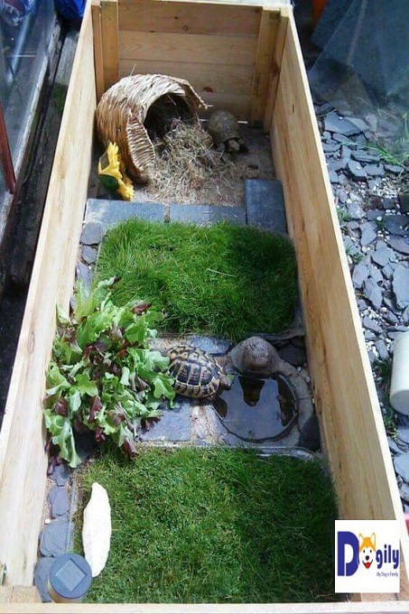 Sau những mẫu với cát, đá sỏi khô cưng. Mẫu chuồng nuoi rùa này đem lại cho bạn sự dịu mát với thảm cỏ và một hồ nước tí hon.