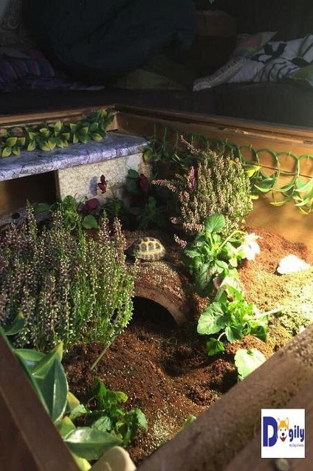 Một mẫu chuồng ngập tràn cây cối. Mặc dù nuôi rùa trong nhà. Bạn có cảm giác như đang ở trong một cánh rừng nguyên sinh nào vậy.