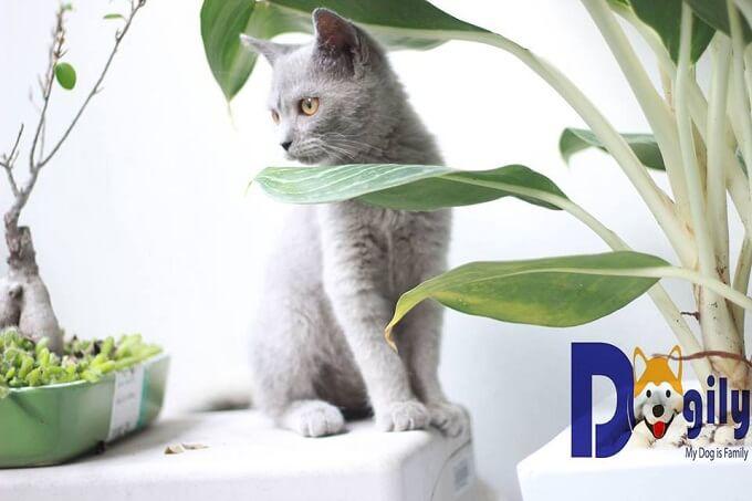 Hợp đồng mua bán, sổ tiêm , giấy bảo hành, hướng dẫn chăm sóc mèo ALN con