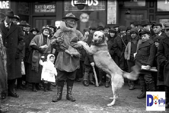Hình ảnh nhà nhân giống Arthur Walden và một trong những chú chó Chinook đầu tiên của Ông