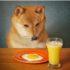 Liệu có nên cho chó ăn trứng gà sống không?