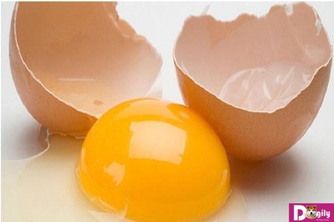 Tận dụng nguồn dinh dưỡng trong trứng gà để cung cấp dinh dưỡng cho chó con