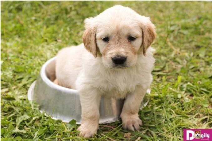 Cần phải cung cấp những dưỡng chất cần thiết thì chó mới có thể lớn nhanh
