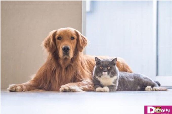 Những dấu hiệu cho thấy vật cưng đang có dấu hiệu mắc các bệnh thường gặp ở chó mèo