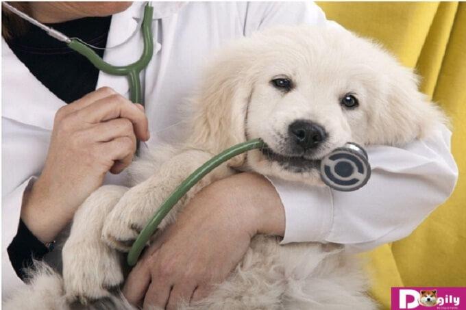 Đâu là các bệnh thường gặp ở chó mèo?