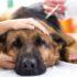 Các bệnh thường gặp ở chó mèo và kinh nghiệm phòng và chữa hiệu quả.