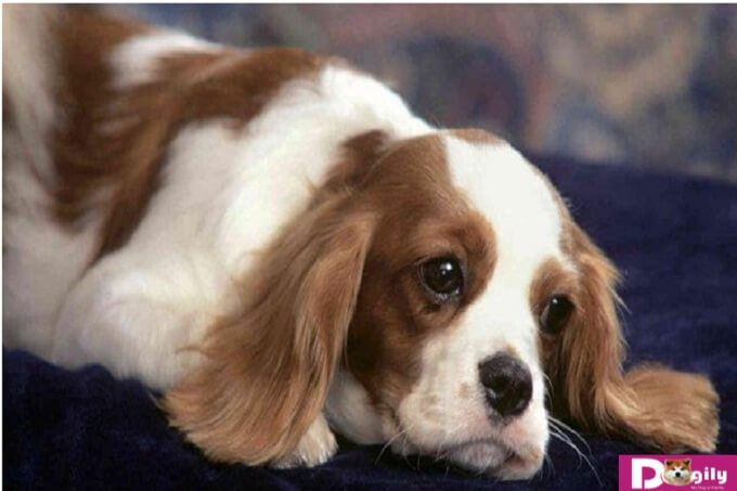 Những lưu ý đáng quan tâm để phòng các bệnh thường gặp ở chó mèo