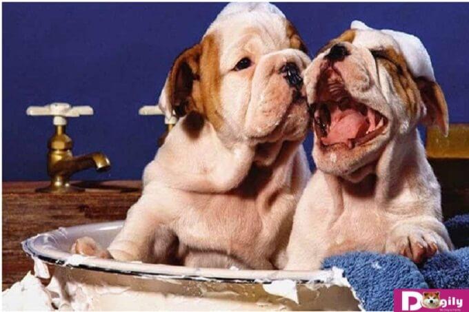Những biện pháp có thể được áp dụng nhằm ngăn ngừa tình trạng bị bọ chét trên chó