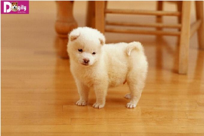 Chọn cún cưng có mức giá phù hợp