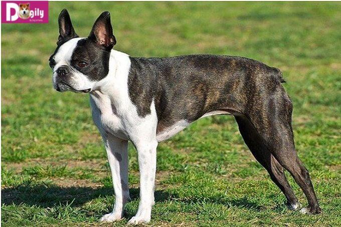 Cách chọn chó tốt – phương pháp nuôi chó khoa học