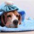 Bạn nên làm gì khi chó bị chảy máu mũi